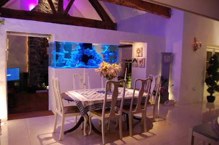 Exotic aquatics belfast aquarium design northern for Outdoor aquarium uk