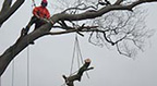 Pellipar Tree Services Image