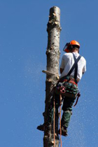 Roe Valley Tree Services Image